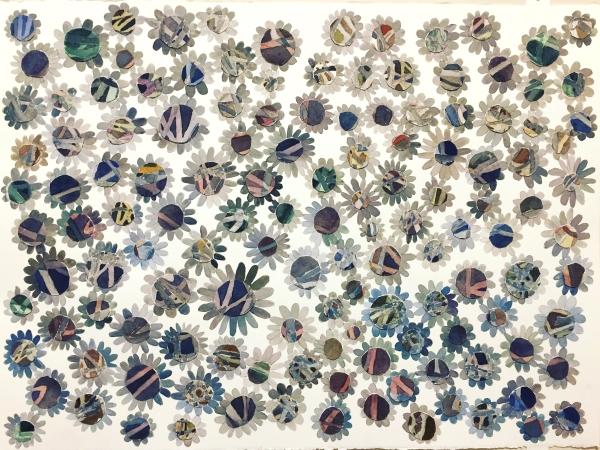 asteraceae field 1