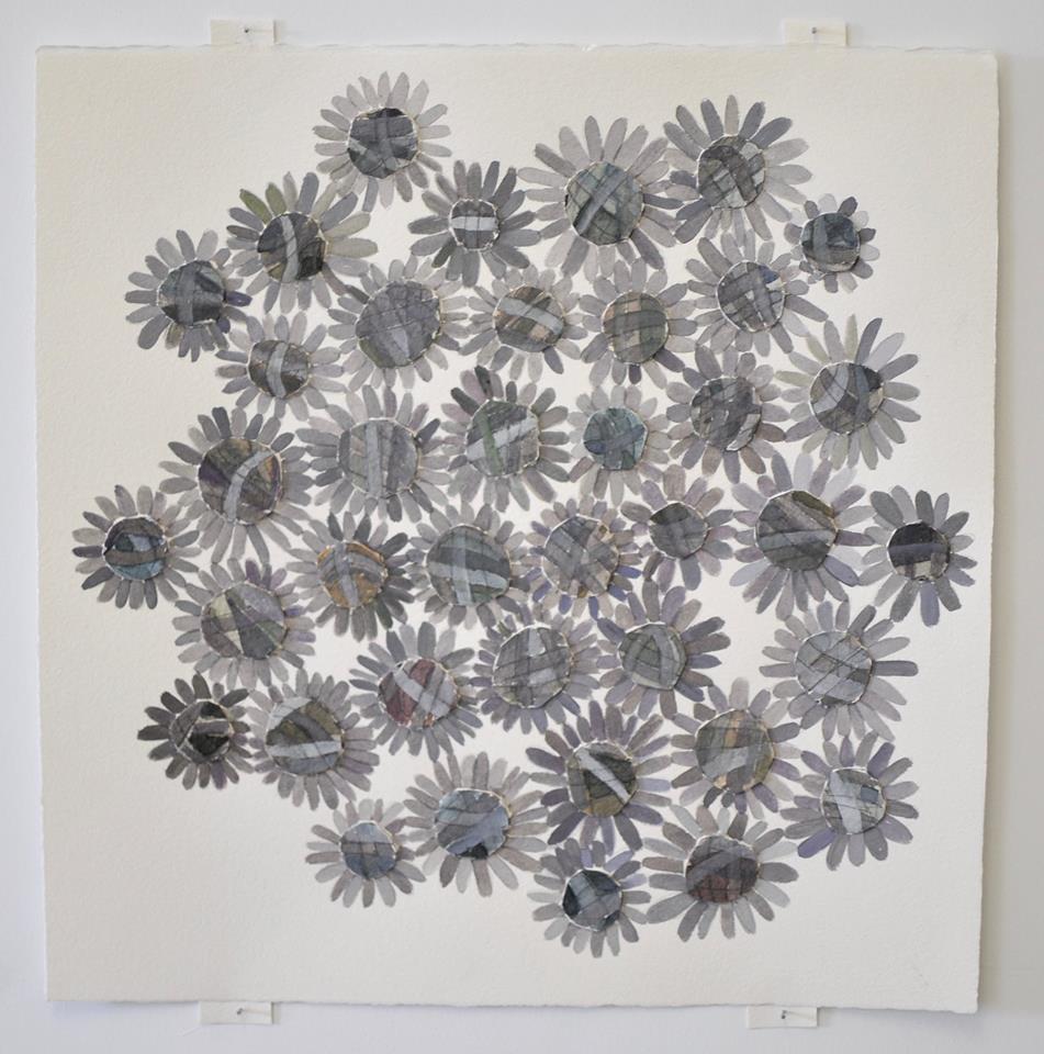 asteraceae1
