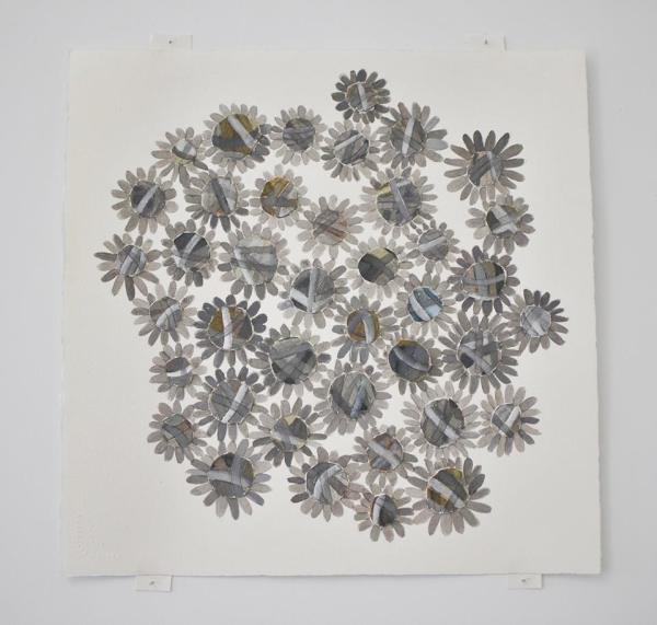 asteraceae2