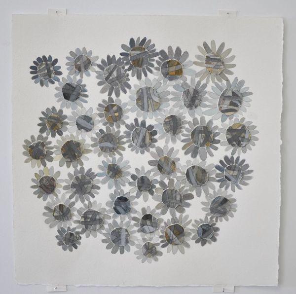 asteraceae3
